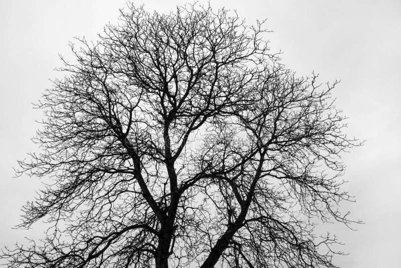 罚款分支,光秃的树 库存图片