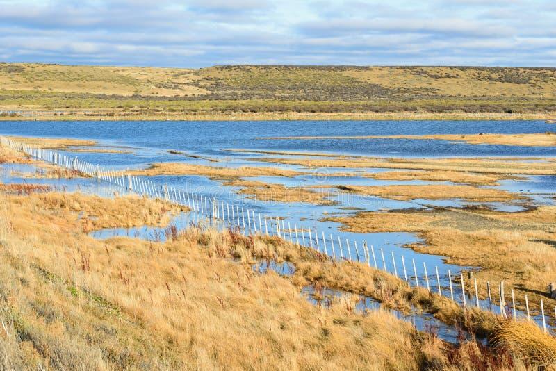 绵羊农场在巴塔哥尼亚和湖 免版税图库摄影