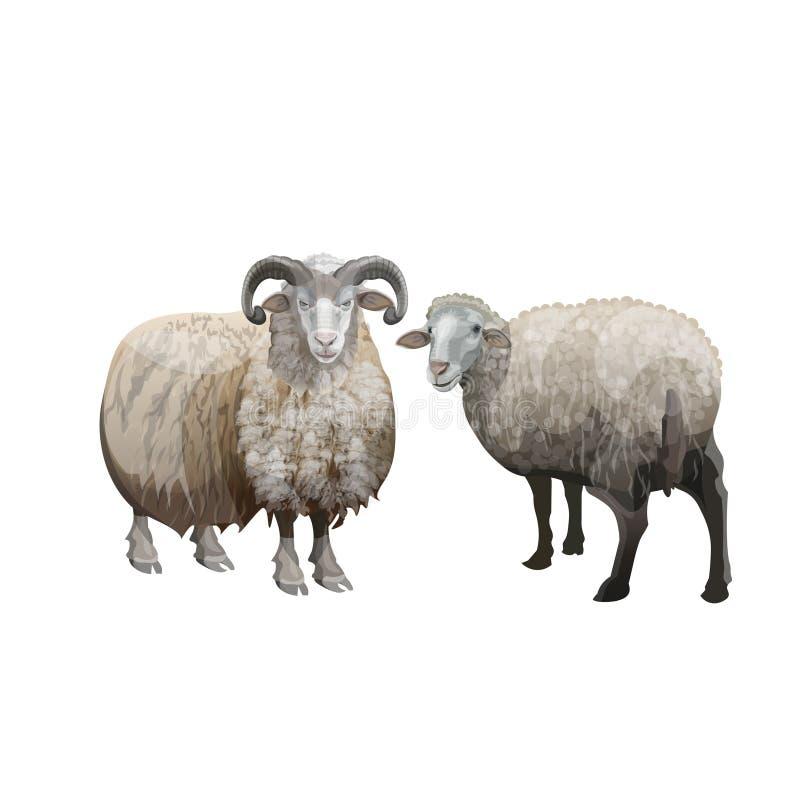 羊和公羊 库存例证