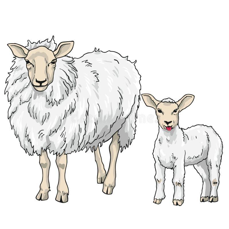 download 绵羊和羊羔,传染媒介例证 向量例证.图片
