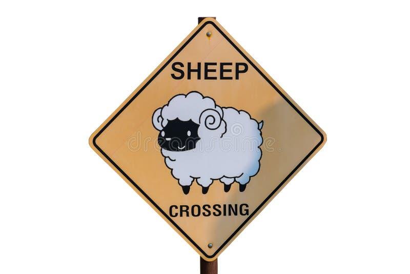 绵羊在大农场的横穿标志 库存照片