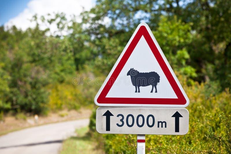 绵羊的交通标志警告在路的 免版税图库摄影