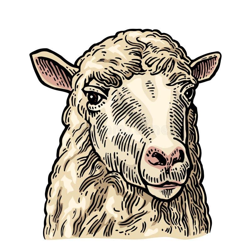绵羊头 手拉在一个图表样式 葡萄酒信息图表的,海报,网板刻例证 查出在白色 库存例证