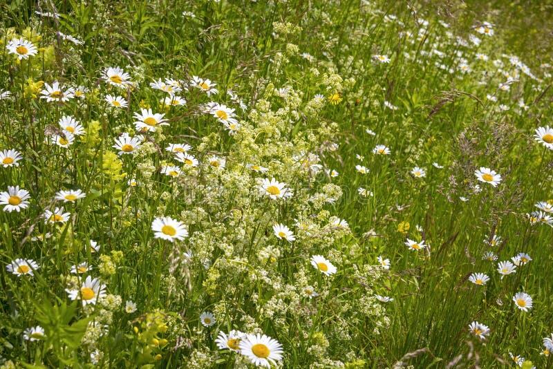 美丽俯视一个夏天草甸 库存照片