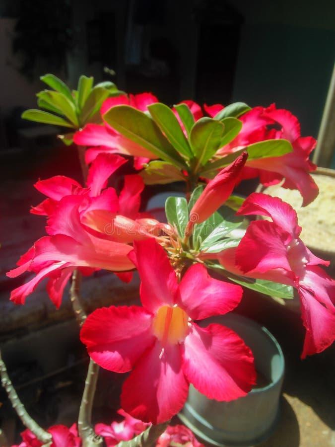 美丽和开花的红色花 库存照片