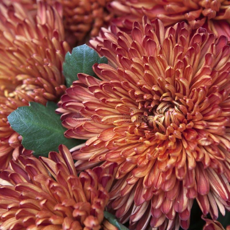 Download 美丽和精美花束 库存图片. 图片 包括有 庭院, beauvoir, 自治权, dalia, 大丽花, 设计 - 59102865