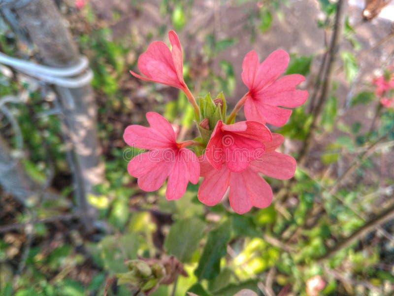 美丽四朵的花 库存照片