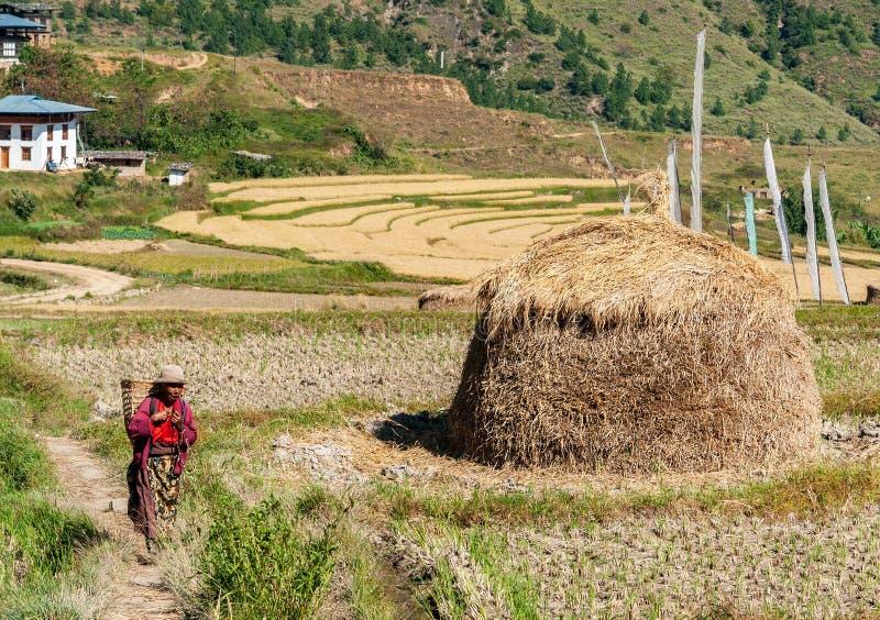 美丽如画的农业风景在农村不丹 免版税库存照片