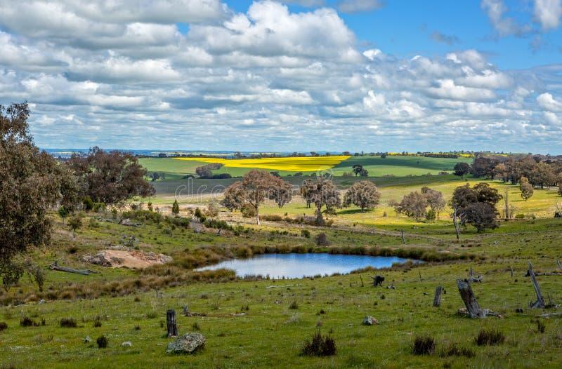 美丽如画的农村农田,只要眼睛能看到 免版税库存图片