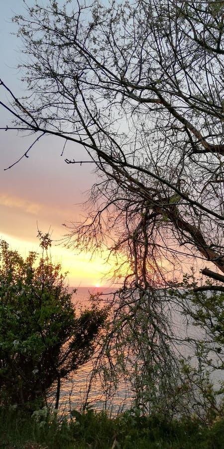 美丽如画的明亮的背景 在红色,桃红色,蓝色,紫色颜色的海洋平衡的日落lscape通过树分支和 图库摄影