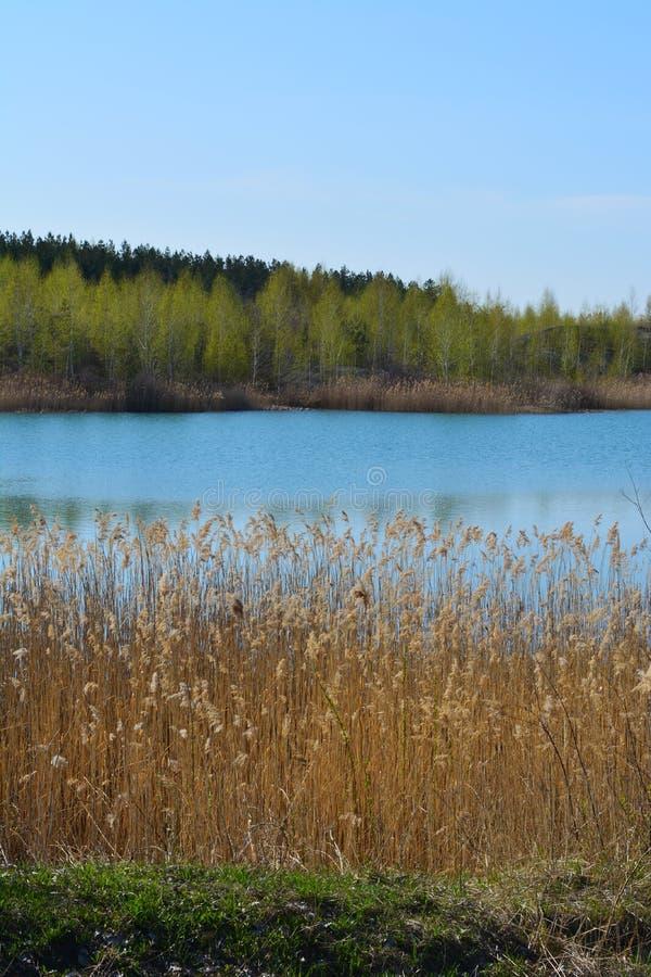美丽如画的横向 有纸莎草丛林的湖在一个银行和森林的其他的 免版税图库摄影