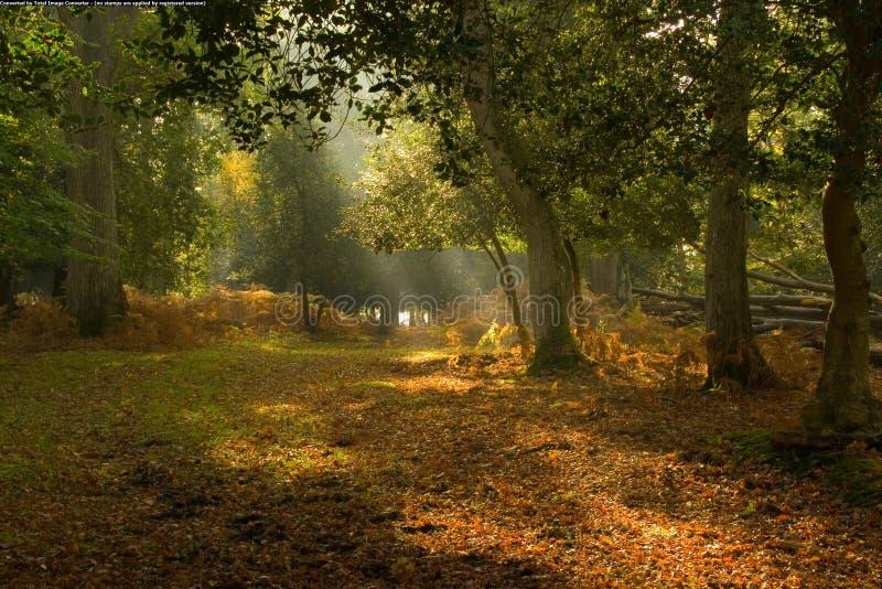美丽如画结算的森林 免版税图库摄影