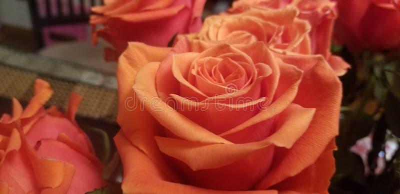 美丽橙色的玫瑰 免版税库存图片