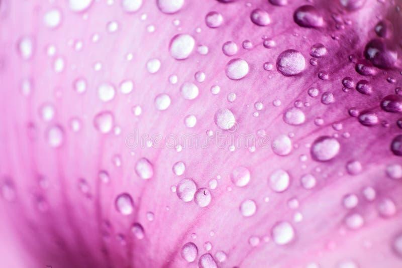 美丽的下落瓣桃红色水 库存图片