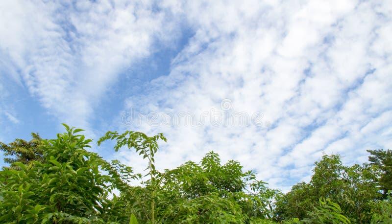 美丽的云彩和天空与树提取背景 免版税图库摄影