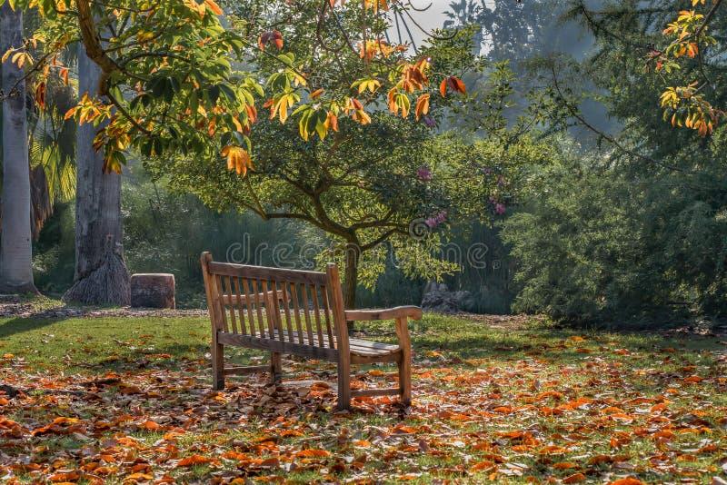 美丽的五颜六色的加利福尼亚秋叶在11月 免版税库存照片