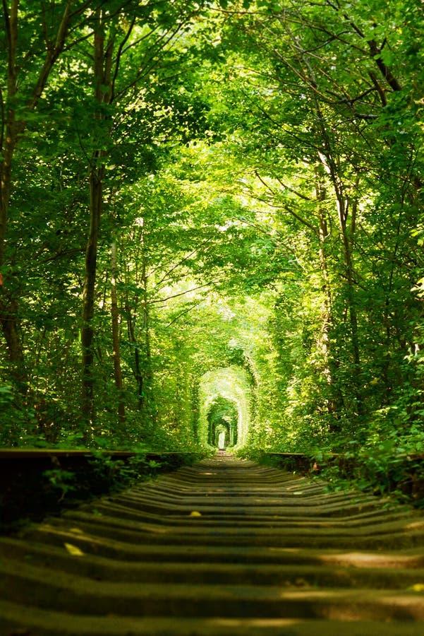 美丽的五颜六色的树胡同在森林,自然本底里 爱、绿色树和铁路不可思议的隧道,在乌克兰 免版税图库摄影