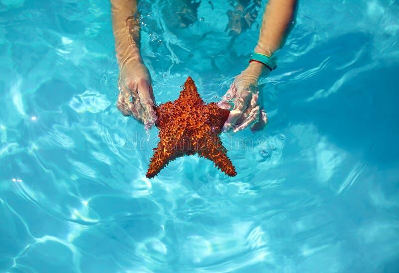 美丽的五颜六色的海星在女孩手上 免版税库存照片