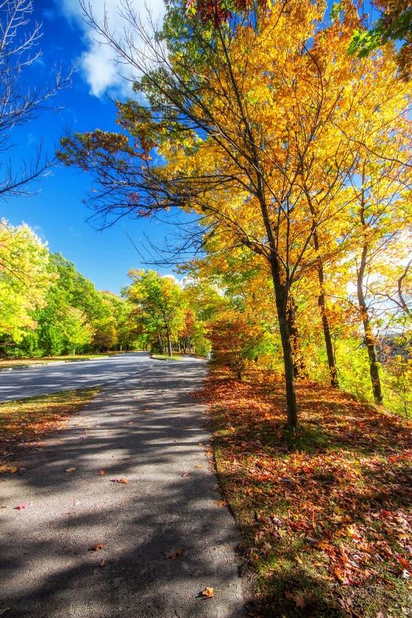 美丽的五颜六色的秋叶在罗切斯特纽约 E 库存照片