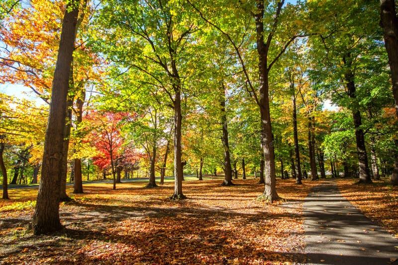 美丽的五颜六色的秋叶在罗切斯特纽约 E 免版税库存照片