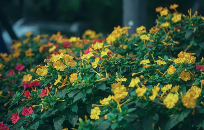 美丽的五颜六色的花和绿色植物特写镜头有被弄脏的背景 库存照片