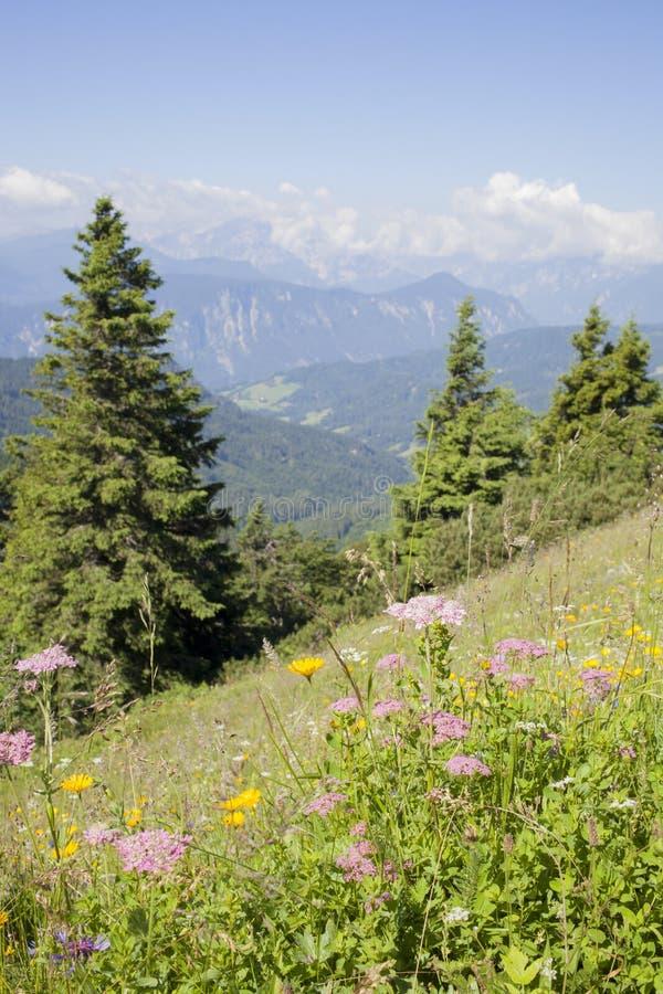 美丽的五颜六色的花高在斯洛文尼亚山 免版税库存图片