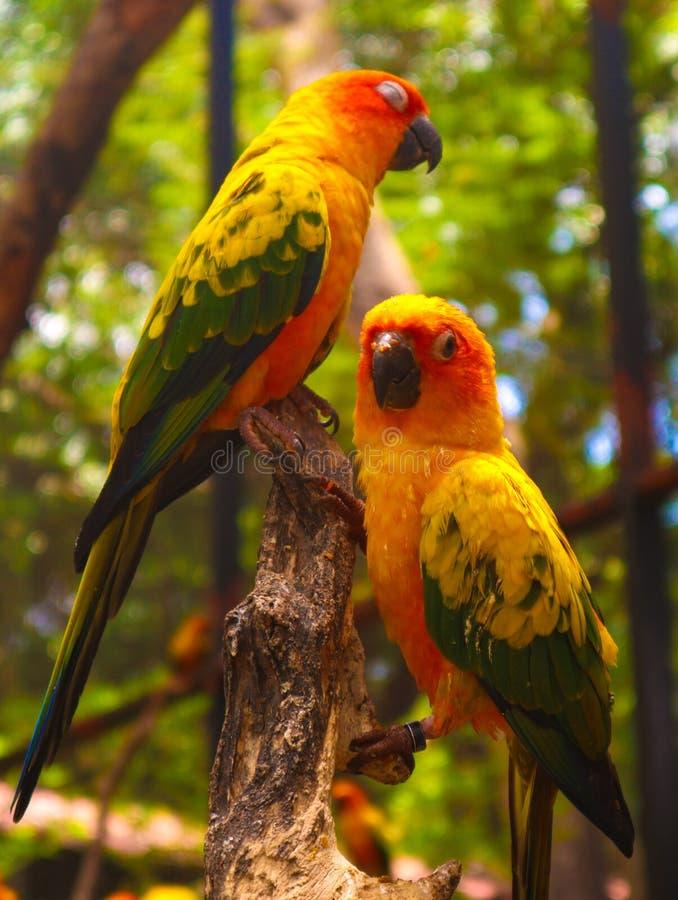 美丽的五颜六色的鹦鹉和金刚鹦鹉鸟在自然热带动物园里 免版税图库摄影