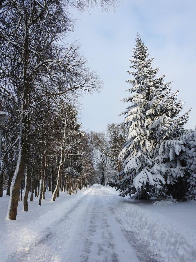 美丽的人行道和好的多雪的树,立陶宛 库存图片