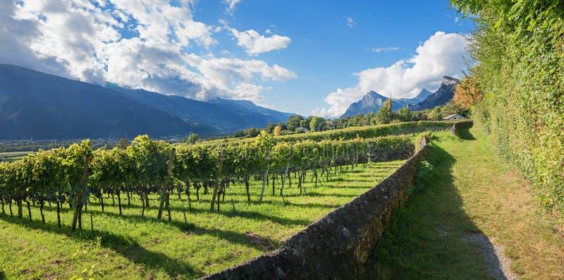 美丽的供徒步旅行的小道通过葡萄园,海蒂土地maienfel 库存照片