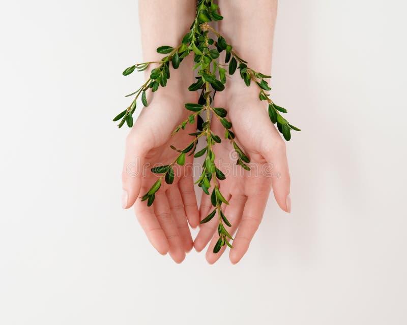 美丽的修饰的妇女的有绿色叶子的棕榈手在桌上 自然有机化妆用品,皮肤护理秀丽,新神色 的treadled 免版税库存照片