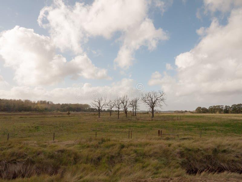 美丽的光秃的树常设结构分支提供援助  免版税库存图片