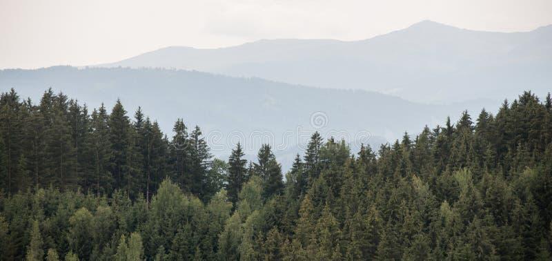 美丽的全景具球果森林 库存照片
