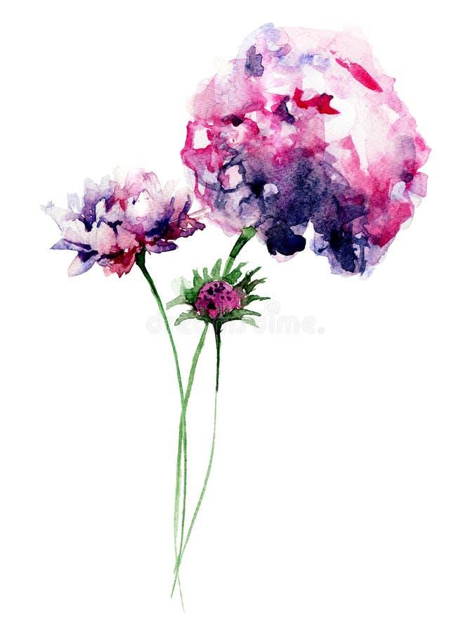 美丽的八仙花属花 库存例证