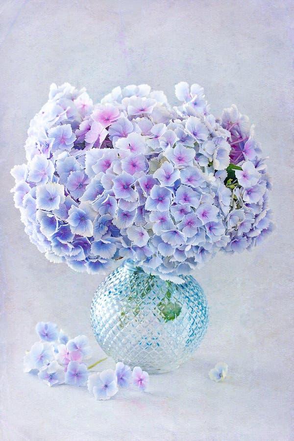美丽的八仙花属花 库存图片