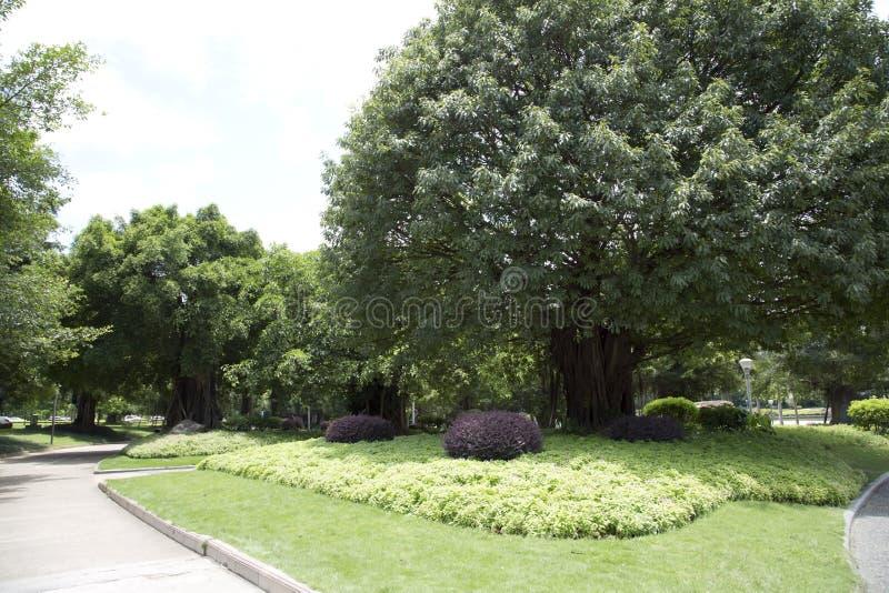美丽的公园在城市 免版税库存照片