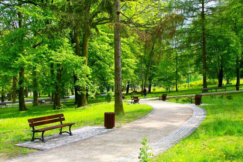 美丽的公园 库存图片