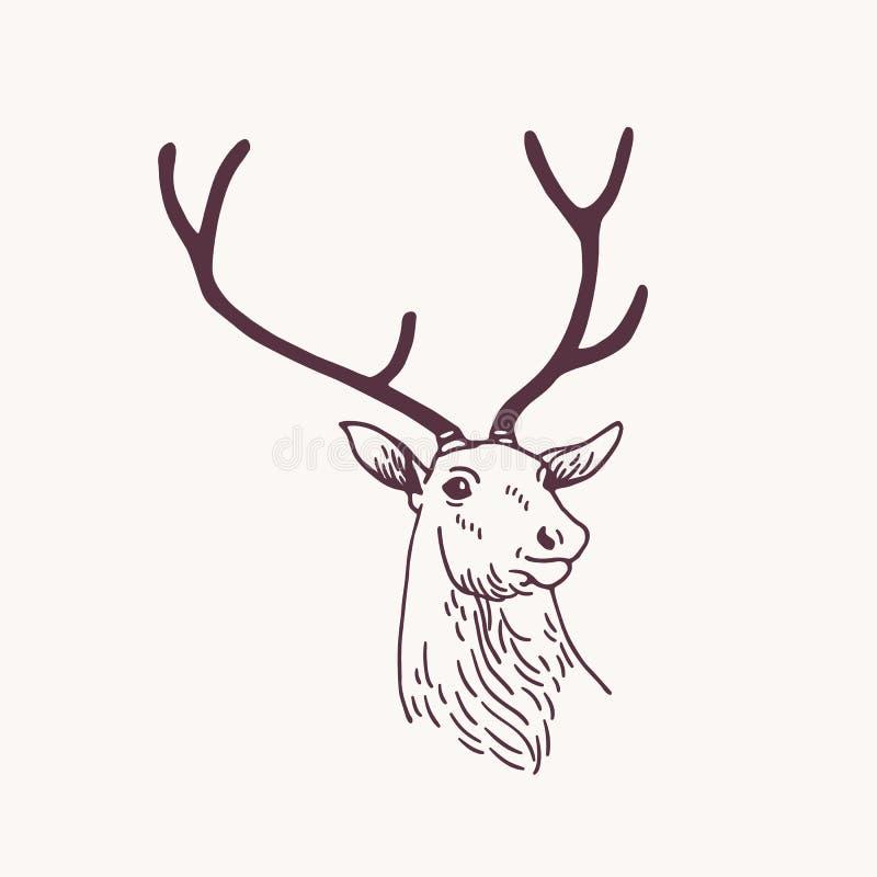 美丽的公鹿、驯鹿或者雄鹿头图画或剪影与典雅的鹿角 森林动物画与 向量例证