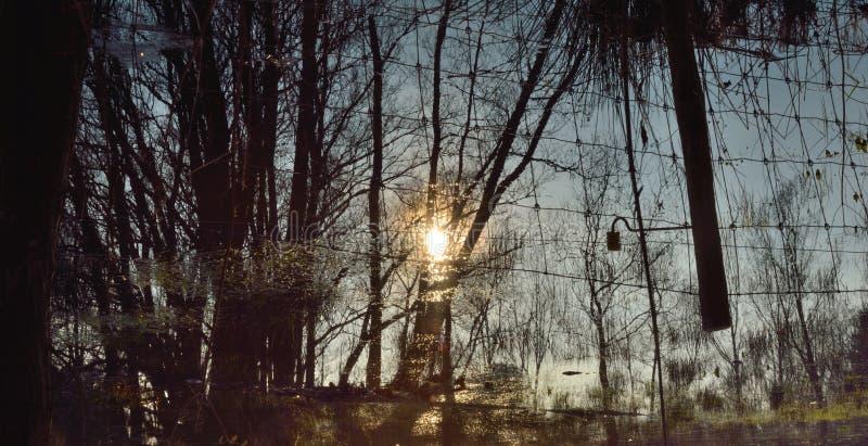 美丽的农村富兰德,被充斥的草甸 免版税图库摄影