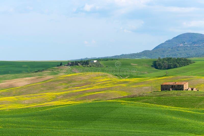 美丽的农田农村风景、柏树和五颜六色的春天花在托斯卡纳,意大利 典型的农村房子 图库摄影