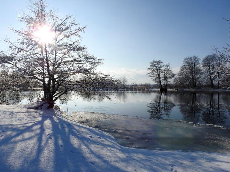 美丽的冬天树临近河,立陶宛 库存照片