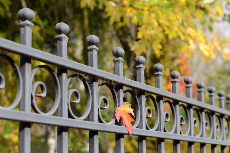 美丽的加工的篱芭 装饰生铁篱芭的图象 金属范围关闭 金属伪造了篱芭 免版税库存照片