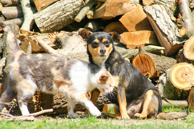 美丽的动物家庭 免版税库存照片
