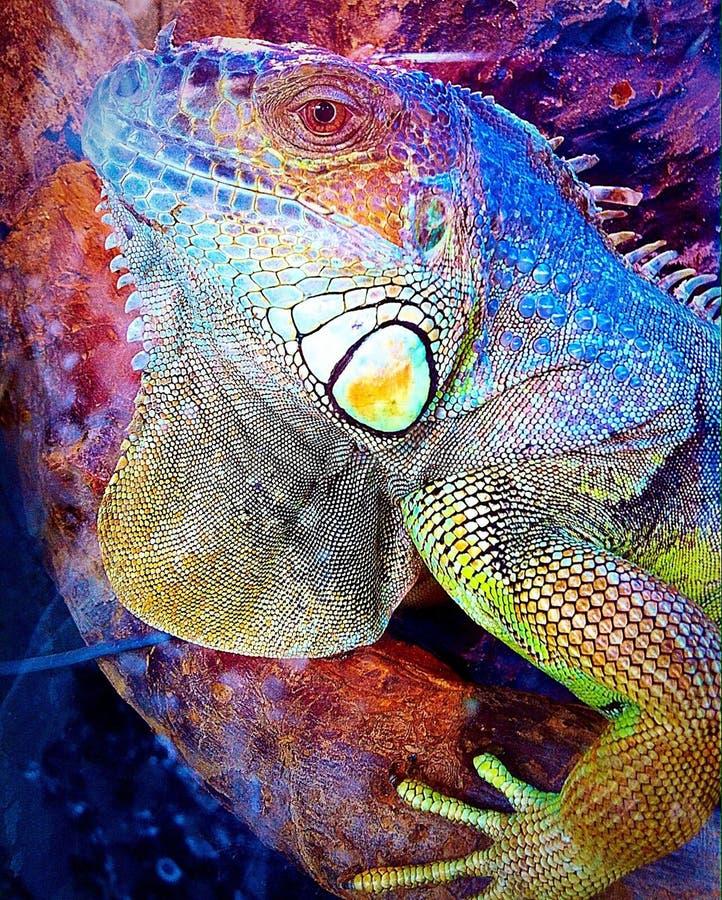 美丽的动物 图库摄影
