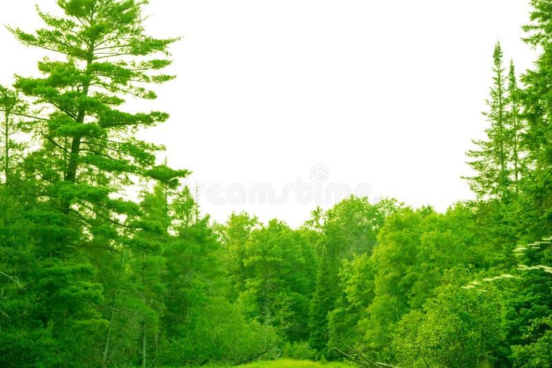 美丽的北密执安森林 免版税库存图片