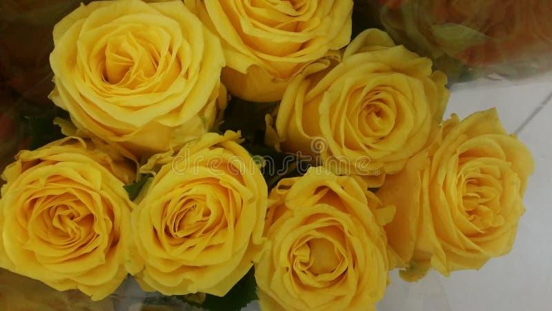 美丽的可爱的柔软光滑的新鲜的黄色玫瑰 库存照片