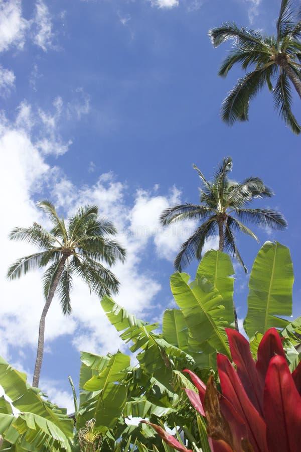 美丽的叶子在毛伊,夏威夷 免版税库存照片