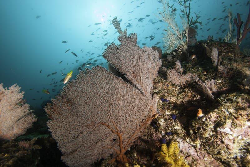 美丽的和平的珊瑚礁 免版税库存照片