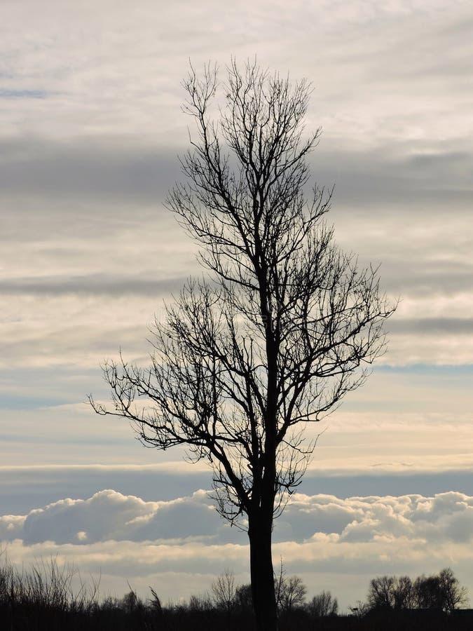 美丽的唯一树在秋天,立陶宛 免版税库存图片