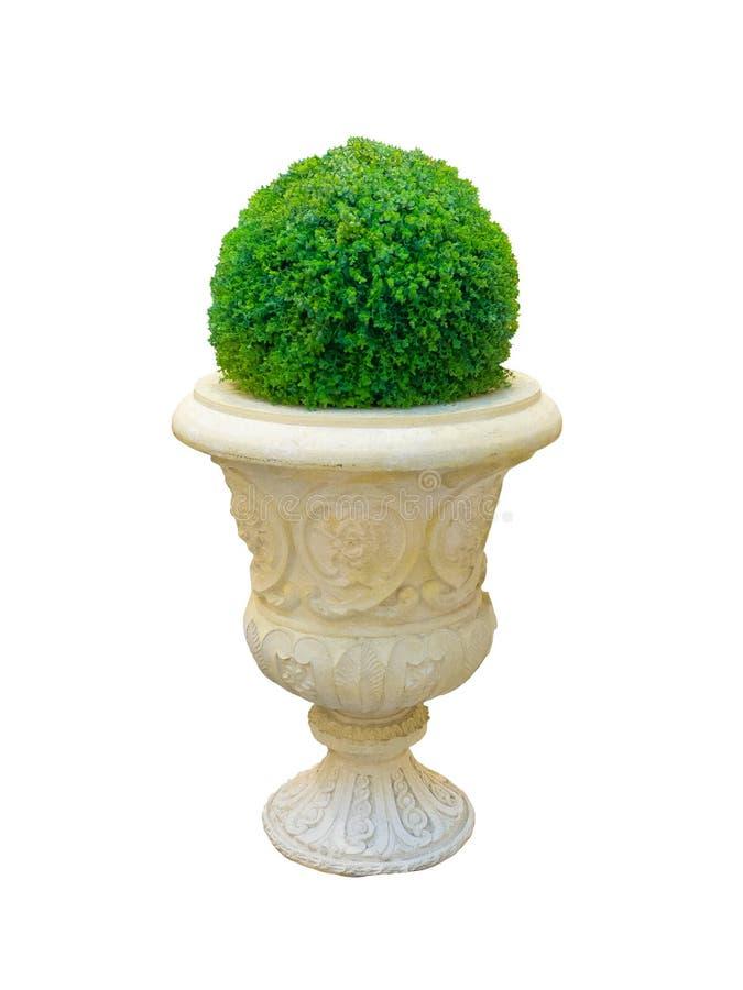 美丽的圆的形状的矮小的树篱砍在设计w的绿色树 库存图片