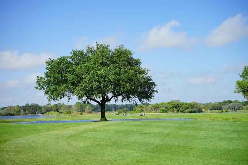 美丽的土地和大树 免版税库存图片